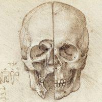 Анатомический рисунок черепа. Леонардо.