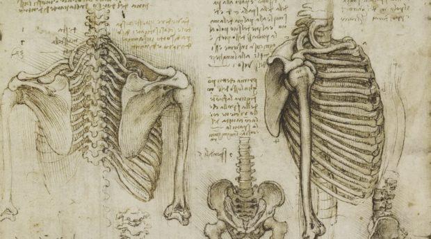 Рисунок скелета. Леонардо.